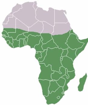 absolutamente africano